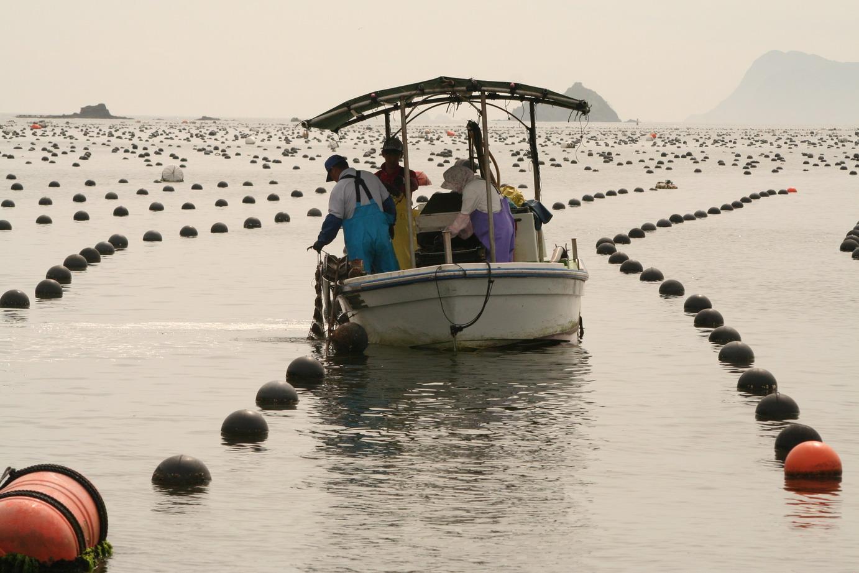 рыба жемчужная фото | Фотоархив: http://photo.bigbo.ru/?p=3800